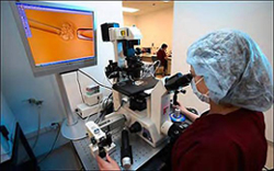 Lab ... an expert carries out IVF - photo thesun.co.uk